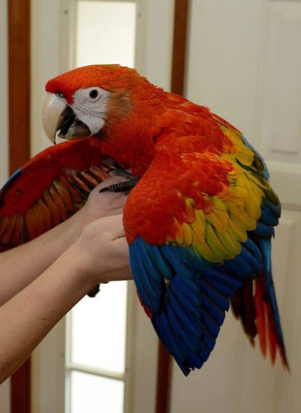 blue and gold macaw in UK